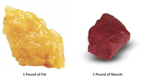 1kg de graisse prend plus de place qu'1kg de muscle.