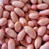 L'arachide fraiche
